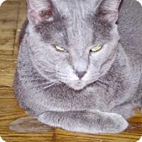 Adopt A Pet :: Newton - Covington, KY