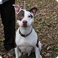 Adopt A Pet :: RUBY - Scotia, NY