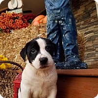 Adopt A Pet :: Ricky - Monroe, GA