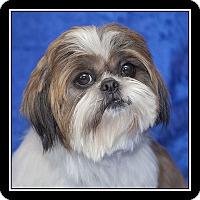 Adopt A Pet :: Anya - San Diego, CA