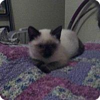 Adopt A Pet :: Aspen - Cedar Rapids, IA