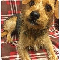 Adopt A Pet :: Whiskey - Los Banos, CA