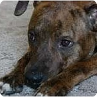 Adopt A Pet :: COOPER - Minnetonka, MN