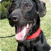 Adopt A Pet :: Spanky - Jacksonville, FL