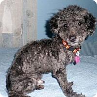 Adopt A Pet :: Pepper - Mooy, AL
