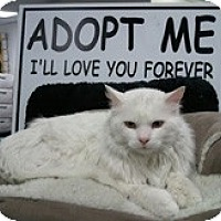 Adopt A Pet :: Fluffers - Anchorage, AK