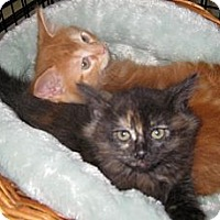Adopt A Pet :: Bonnie (Bonnie and Clyde) - Dallas, TX