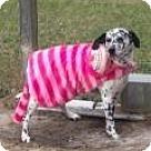 Adopt A Pet :: Buddy