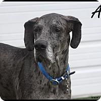 Adopt A Pet :: Alfie - Rockwall, TX