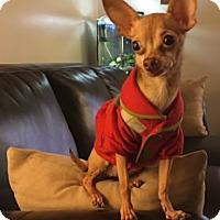 Adopt A Pet :: Kessa - Avon, NY