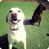 Adopt A Pet :: Brownie and Jack - Sacramento, CA