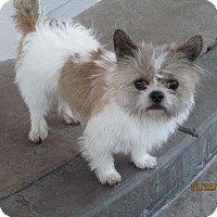 Adopt A Pet :: Scarlet - Arvada, CO