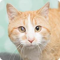 Adopt A Pet :: Remy - Chippewa Falls, WI