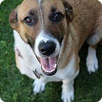 Adopt A Pet :: Martha - Phoenix, AZ