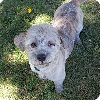 Adopt A Pet :: Gino - Bend, OR