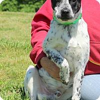 Adopt A Pet :: Jethro - Glastonbury, CT