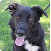 Adopt A Pet :: KYLER - Red Bluff, CA