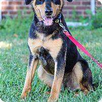 Adopt A Pet :: Zeus - New Oxford, PA