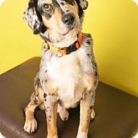 Adopt A Pet :: George McBee - Roanoke, VA