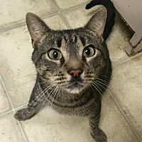 Adopt A Pet :: Flounder - Wilmington, DE