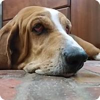 Adopt A Pet :: Buttercup - Dallas/ Ft. Worth, TX