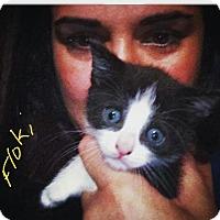 Adopt A Pet :: Floki - Island Park, NY