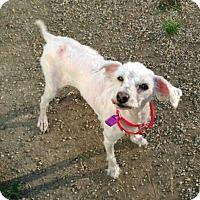 Adopt A Pet :: Seimone - Mukwonago, WI
