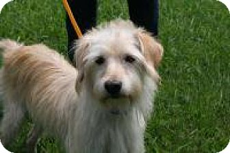 Adopt A Dog Laredo Tx