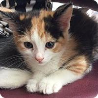 Adopt A Pet :: A399574 - San Antonio, TX