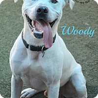 Adopt A Pet :: Woody - Youngwood, PA