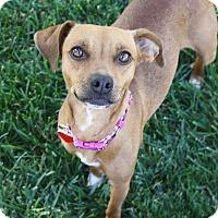 Adopt A Pet :: Phoebe - 15 lbs! - Bellflower, CA