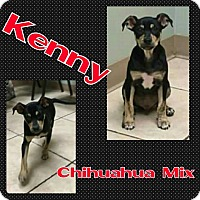 Chihuahua Mix Puppy for adoption in Harrisburg, North Carolina - Kenny