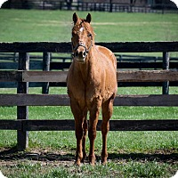 Adopt A Pet :: Elvis - Nicholasville, KY