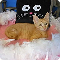 Adopt A Pet :: Sadie - Glendale, AZ