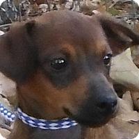 Adopt A Pet :: Cinnamon - Cedartown, GA