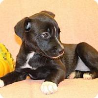 Adopt A Pet :: Spider - Modesto, CA