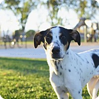 Adopt A Pet :: Dock - Salt Lake City, UT
