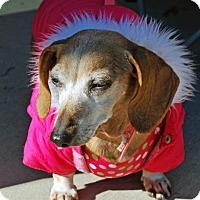 Adopt A Pet :: Lily - Madison, AL