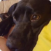 Adopt A Pet :: Kayla - Jacksonville, FL