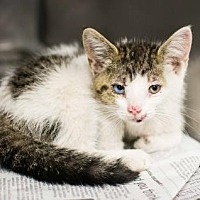 Adopt A Pet :: Foxie - Adopted - Decatur, GA