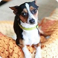 Adopt A Pet :: Monroe - Matthews, NC