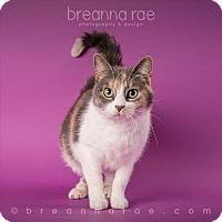 Adopt A Pet :: Molly - Sheboygan, WI