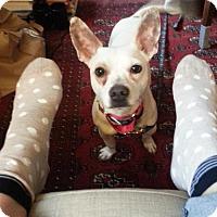 Adopt A Pet :: Parker Bates - Brooklyn, NY