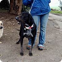 Adopt A Pet :: Jasper - Orange Cove, CA