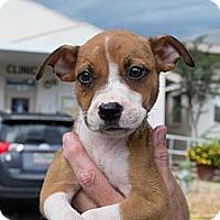 Adopt A Pet :: Delilah - Orlando, FL