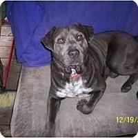 Adopt A Pet :: Who - HOBOKEN, GA