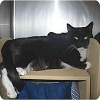 Adopt A Pet :: Ursula - Colmar, PA