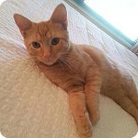 Adopt A Pet :: Jack - Monroe, NC