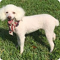 Adopt A Pet :: DUNKIN - Melbourne, FL