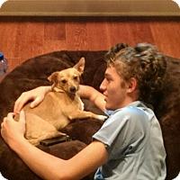 Adopt A Pet :: Lila - Windermere, FL